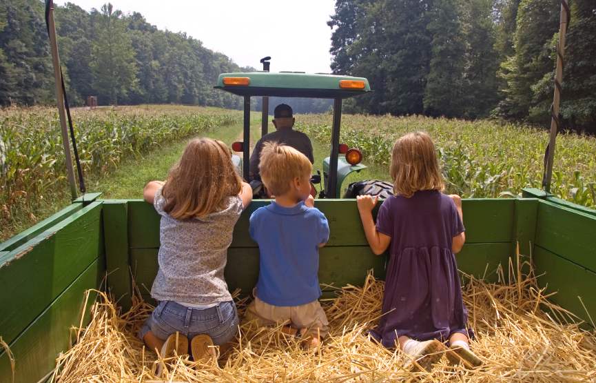 children-on-the-farm